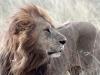 Pressefoto 2 - Masai Mara