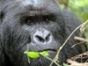 Werbefoto 3 - DR Kongo