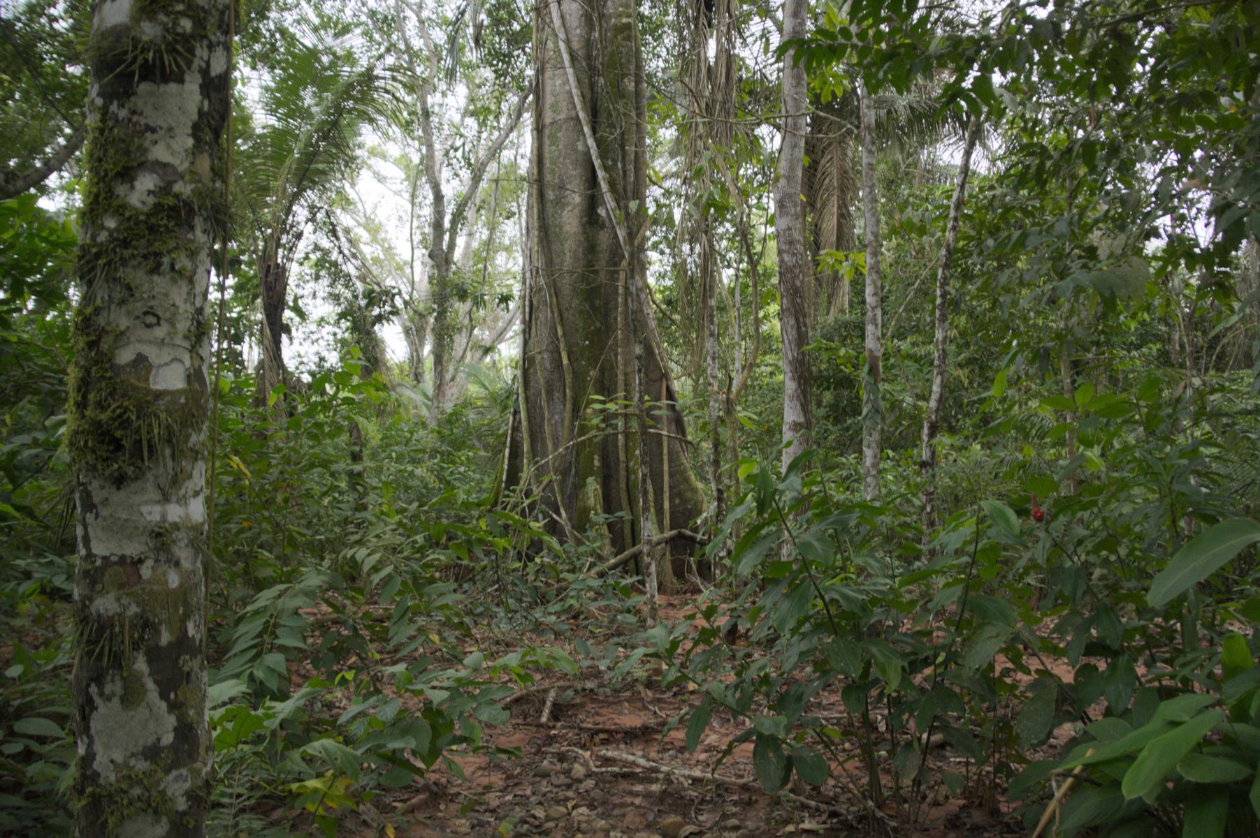K1600 Im Dschungel